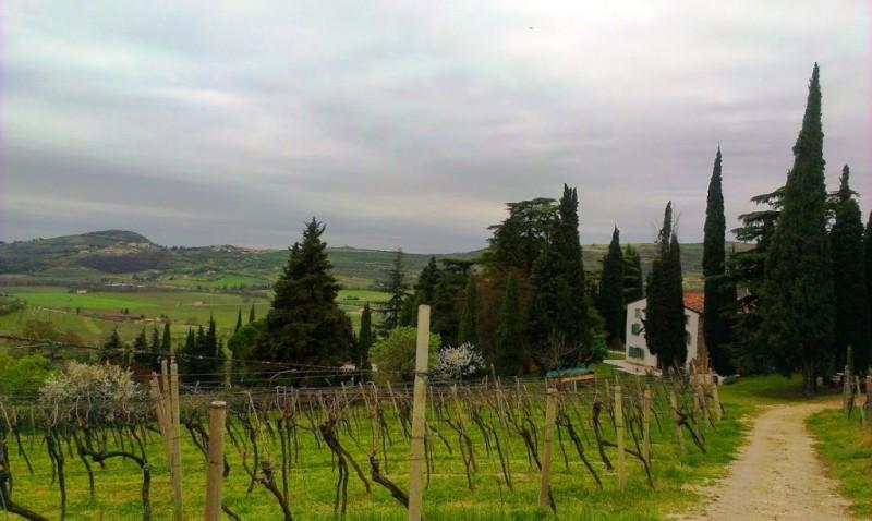 Vineyard Verona