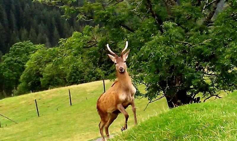 Wildpark Aurach Kitzbühel