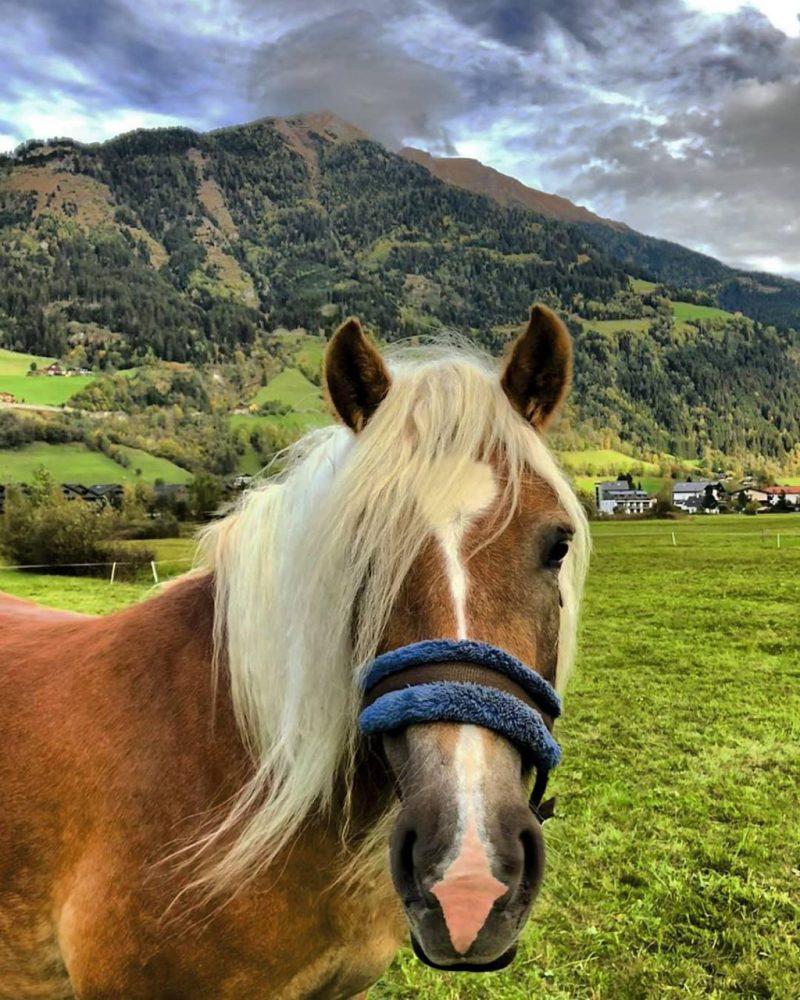 Horse riding Gastein